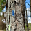 Thumbnail: Cianita Azul e Cianita Verde escapulário moldura de prata