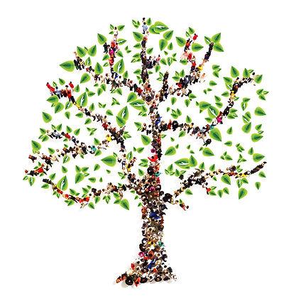 arbol genealogico proyecto sentido