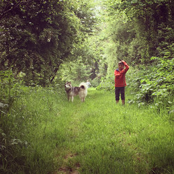Drews Woodland