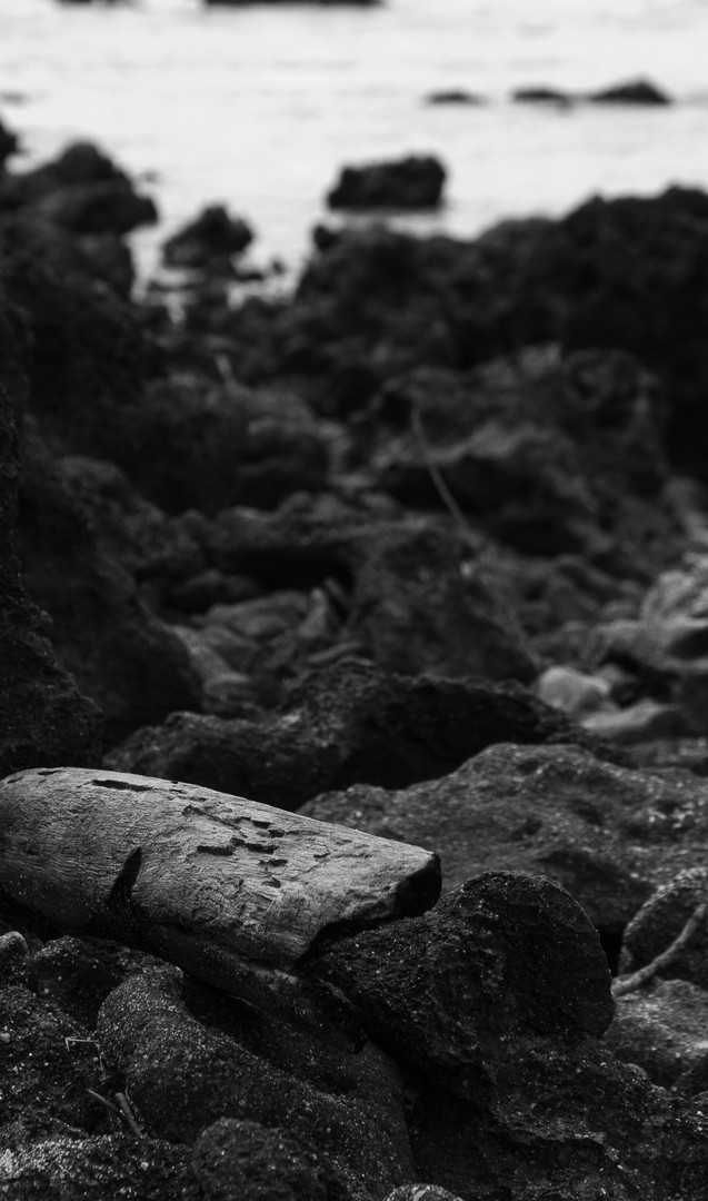 Madeira perdida