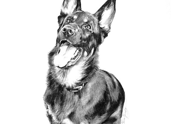 CUSTOM 11 x 14 Single Pet Portrait in Graphite