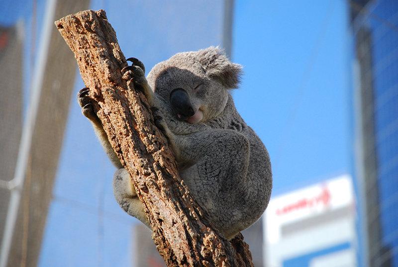시드니 와일드 라이프 동물원