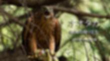 bird_YouTubeアップ用_8016245_750.jpg