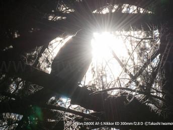 「都会のオオタカ、観察の記録」40 エピローグ、つながっていく生命