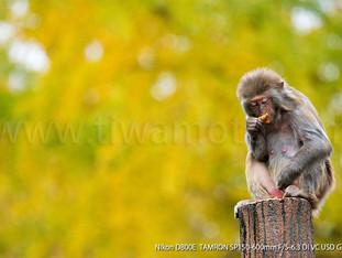 寒さへの対応、動物園の動物たち
