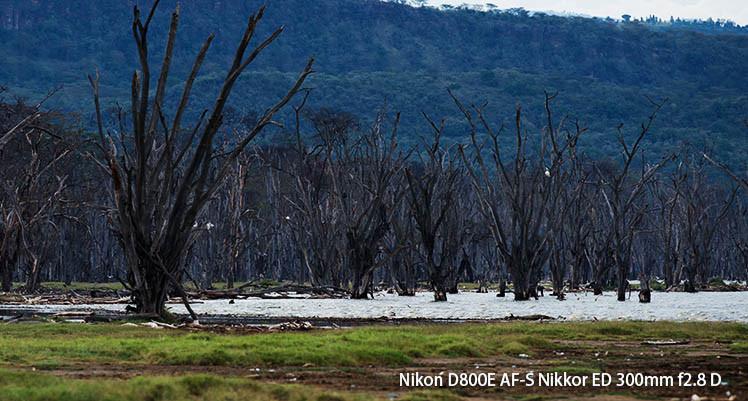 Lake Nakuru Dead Forest
