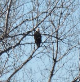 Eagle King Lake Antler Ridge