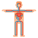 circulatory-system.png