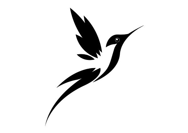 zwart-vogel.jpg