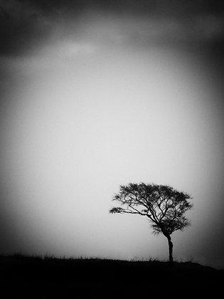'Lone Tree' on the Isle of Mull