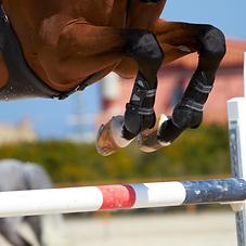 Horse DNA Warmblood Jumper