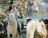 Barber horses.png