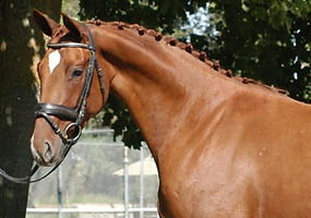 Chestnut Horse DNA with Dominant White 20