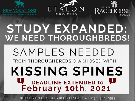We Need Thoroughbreds - Kissing Spines Study Expanded