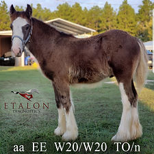 EtalonDx SD Royal Flush_W20/W20 and Tobiano Horse.jpg
