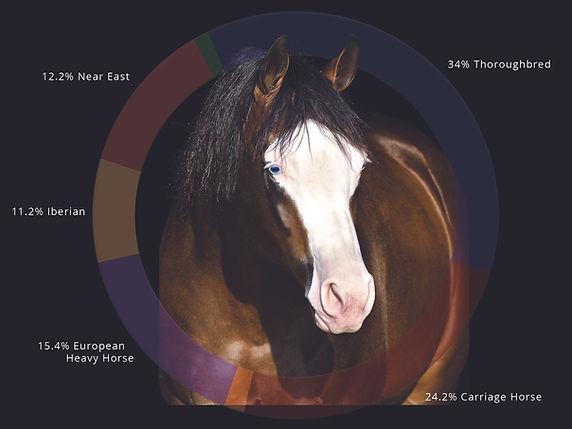 Etalon Horse Ancestry Composition DNA Analysis Reining Quarter Horse