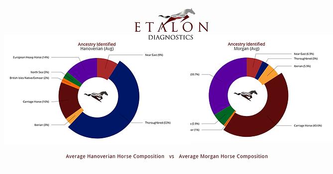 EtalonDx_Hanoverian_v_Morgan_Ancestry.pn