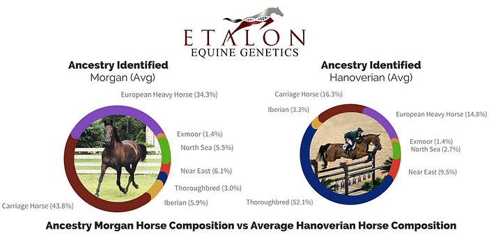 Horse Breeds DNA Test Comparison