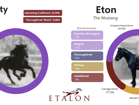 Genetic Deep Dive: Can Eton the Mustang be a Friesian? The American Mustang's Ancestry & Composition