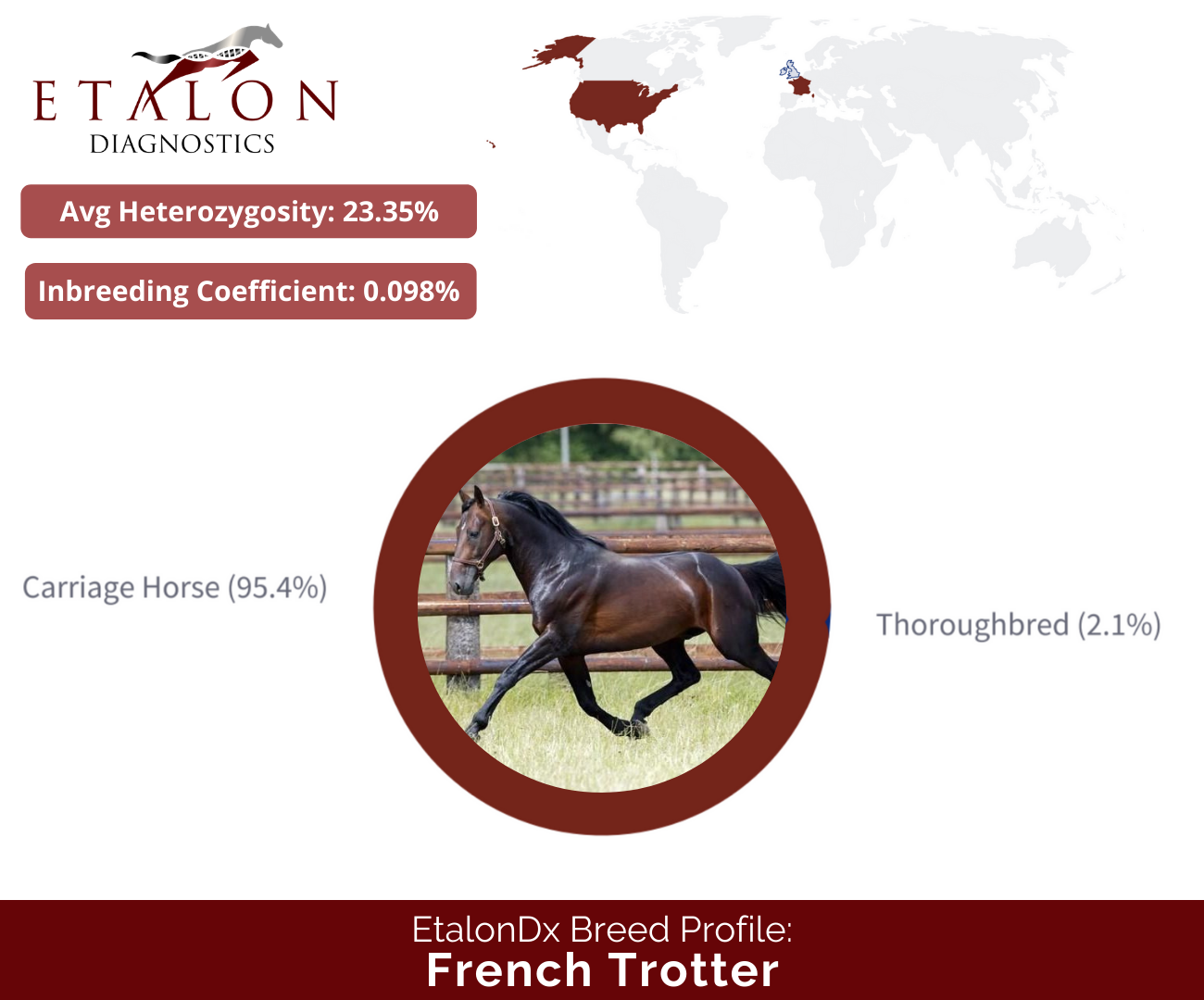 French Trotter