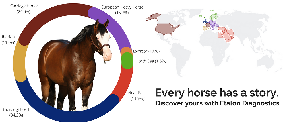 Horse Breed DNA Ancestry Test