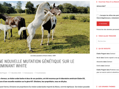 Stunning White Foal's Rise to French Fame