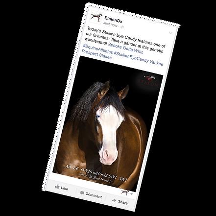 EtalonDx Spooks Gotta Whiz Horse Genetics - Stallion Eye Candy