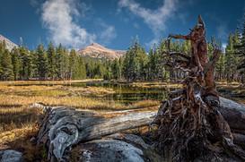 Mt.-Gibbs---Yosemite-1.jpg