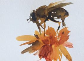 Bee and Daisy