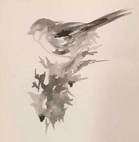 Black-capped Chickadee #1