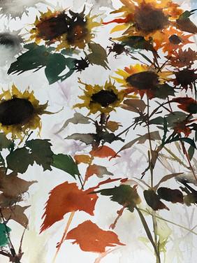 Sunflowers, Ft. Mason
