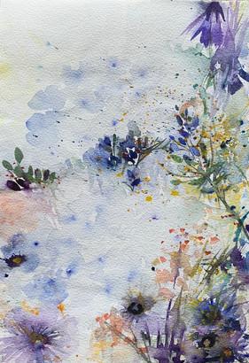 Wildflowers, Telegraph Hill