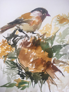 Chickadee on Sunflower, The Presidio, San Francisco - SOLD