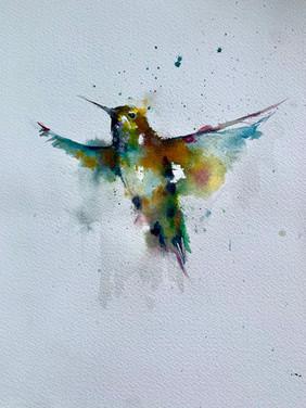 Hummingbird (Goat Hill, San Francisco)