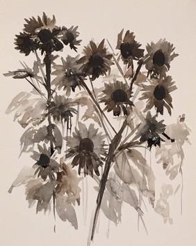 Sunflowers, The Presidio, San Francisco, CA