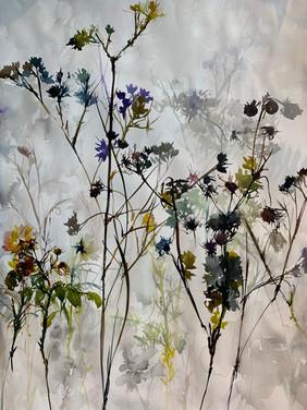 Wildflowers, Old Coast Highway, Gualala, CA.