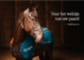 bemer horse.jpg