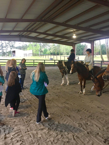 4H learning about the Arabian Horse