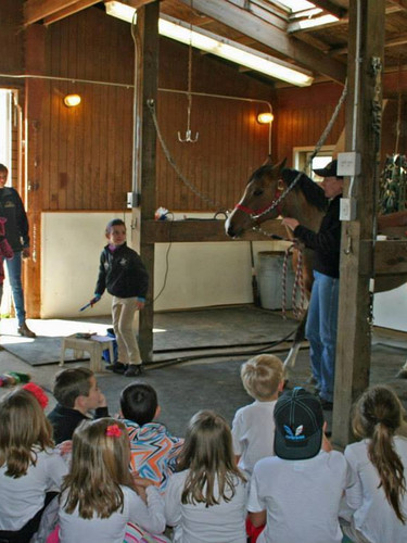 Young Children Learning about Arabians