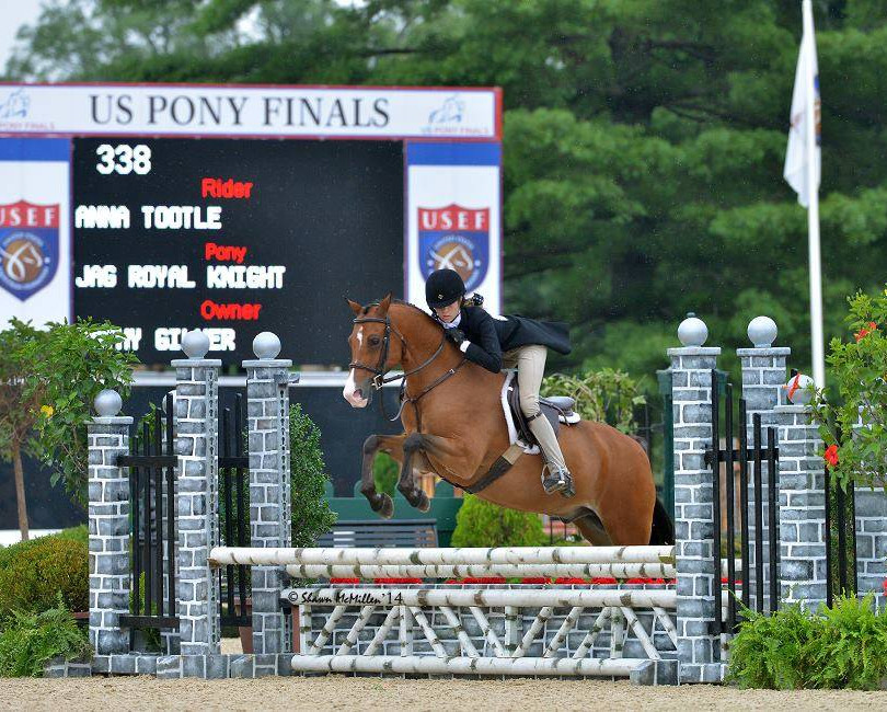 Half Arabian at USEF Pony Finals