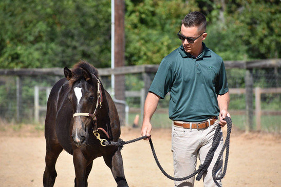 Devan Cottrell with young horse