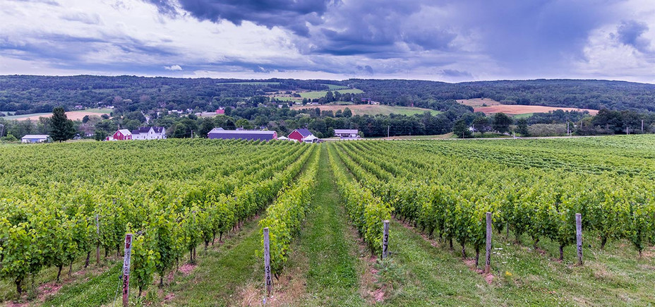 Gaspereau Vineyard