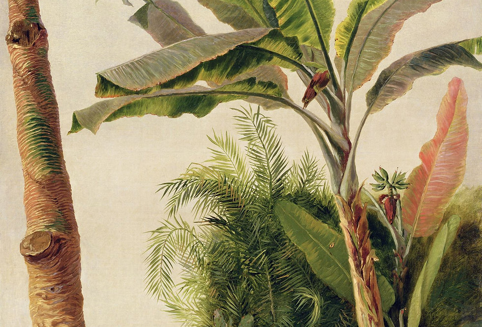 BANANA TREE par Les Dominotiers