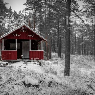 Survive the Winter Contest