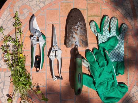 Garden Basics! (Day 1 of Beginner Gardener Intensive 2021)