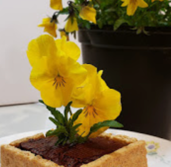 Garden Party Vegan Flower Cake - Kid Friendly!