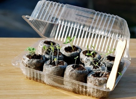 Build Your Own Tiny Greenhouse