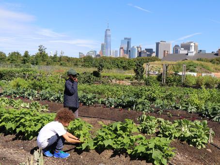 Teaching Garden Update 9/11