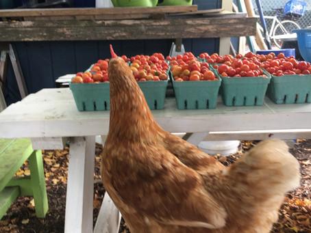 Teaching Garden Update 10/2