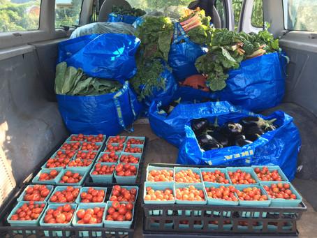 Teaching Garden Update August 21